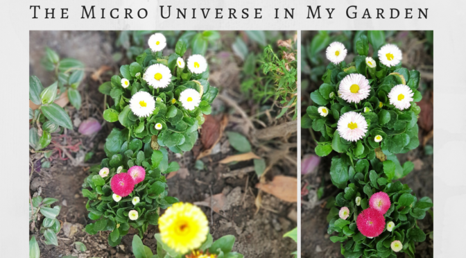 Spring Season : The Micro Universe in my Garden
